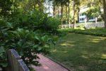 Shuluk Front lawn